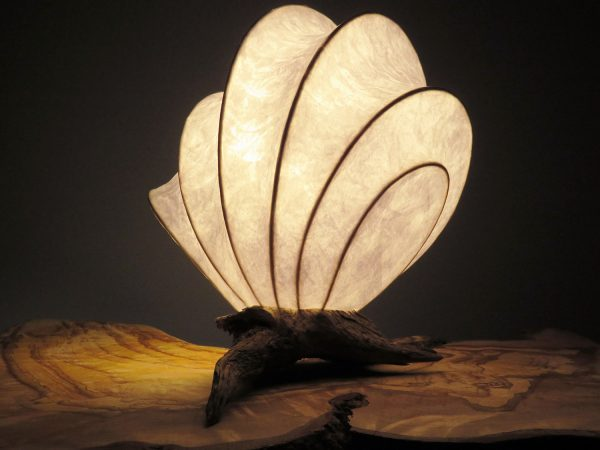 Coquille 4