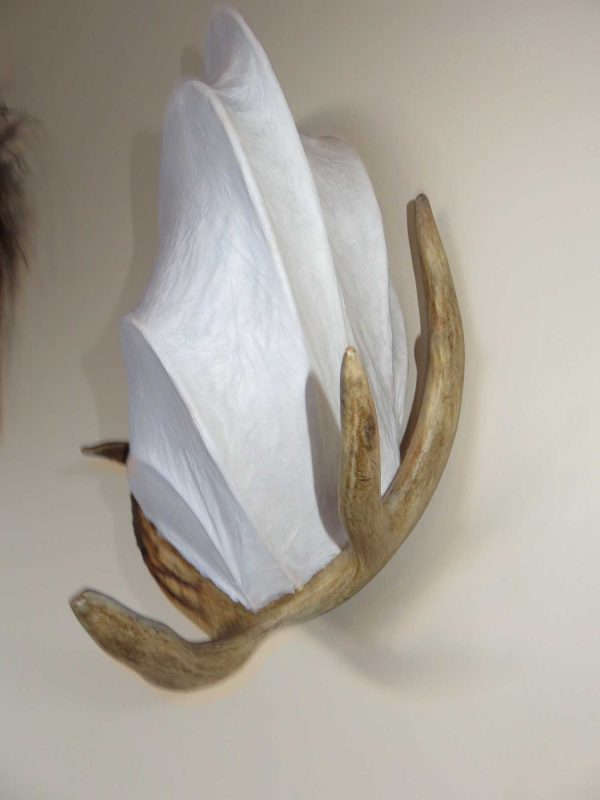 Young Buck | LED Nature Light Fixture 03